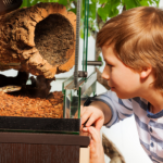 can ball pythons see through glass