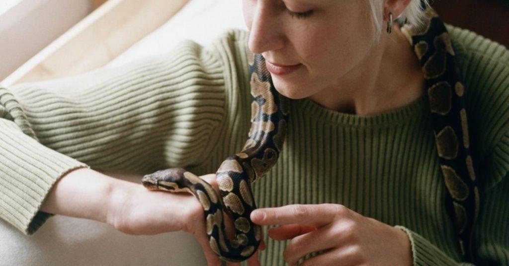 Are Ball Pythons Good Pets