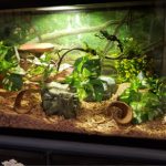 How to Increase Humidity in Ball Python Tank