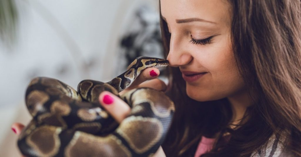 do you need a license to own a ball python