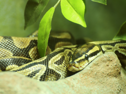 Best Plants for Ball Python